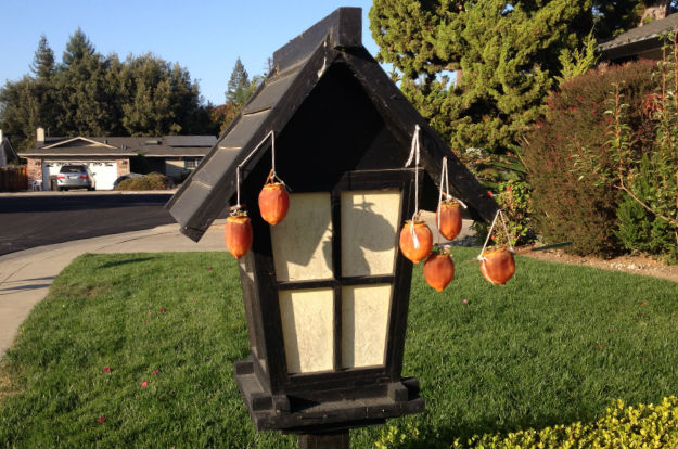 Hanging dried persimmons