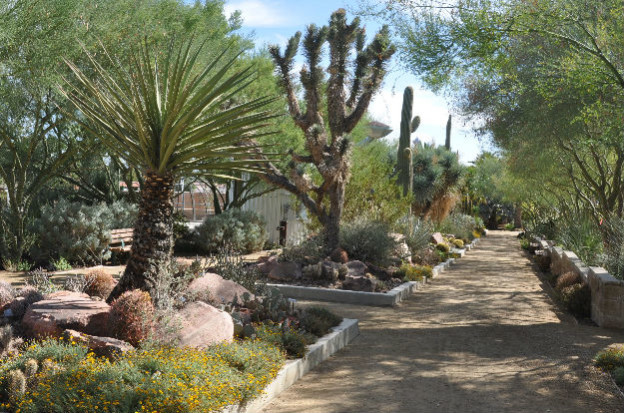 Desert plants at the Springs Preserve in Las Vegas