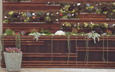 Image of wall garden with succulents